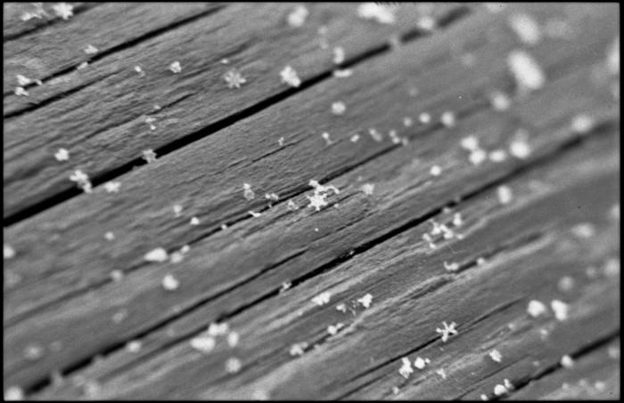snowflakes_Pop&Sparkle